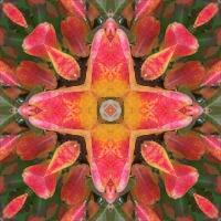 Kaleidoscope #821