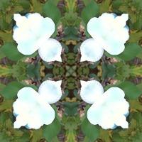 Kaleidoscope #837