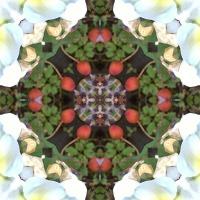 Kaleidoscope #841