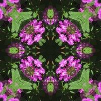 Kaleidoscope #952