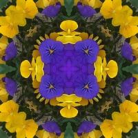 Kaleidoscope #956