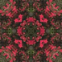 Kaleidoscope #960