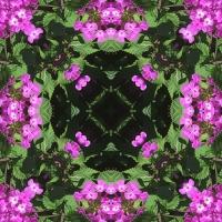 Kaleidoscope #964
