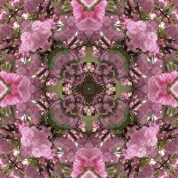 Kaleidoscope #965