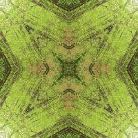 Kaleidoscope #1009