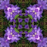 Kaleidoscope #1010