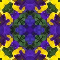 Kaleidoscope #1013