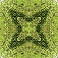 Kaleidoscope #992