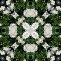 Kaleidoscope #1017