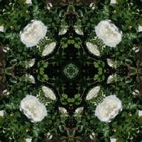 Kaleidoscope #1048