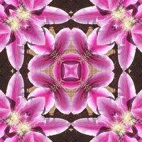Kaleidoscope #1108