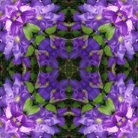 Kaleidoscope #1118