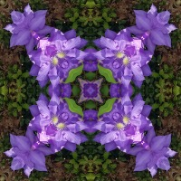 Kaleidoscope #1125