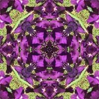 Kaleidoscope #1127