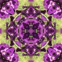 Kaleidoscope #1130