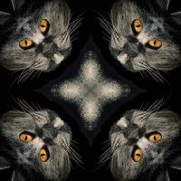 Kaleidoscope #1147