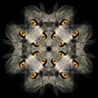 Kaleidoscope #1151