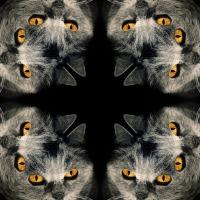 Kaleidoscope #1157