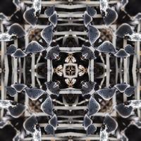 Kaleidoscope #1159