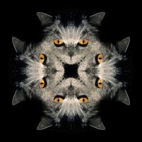 Kaleidoscope #1161